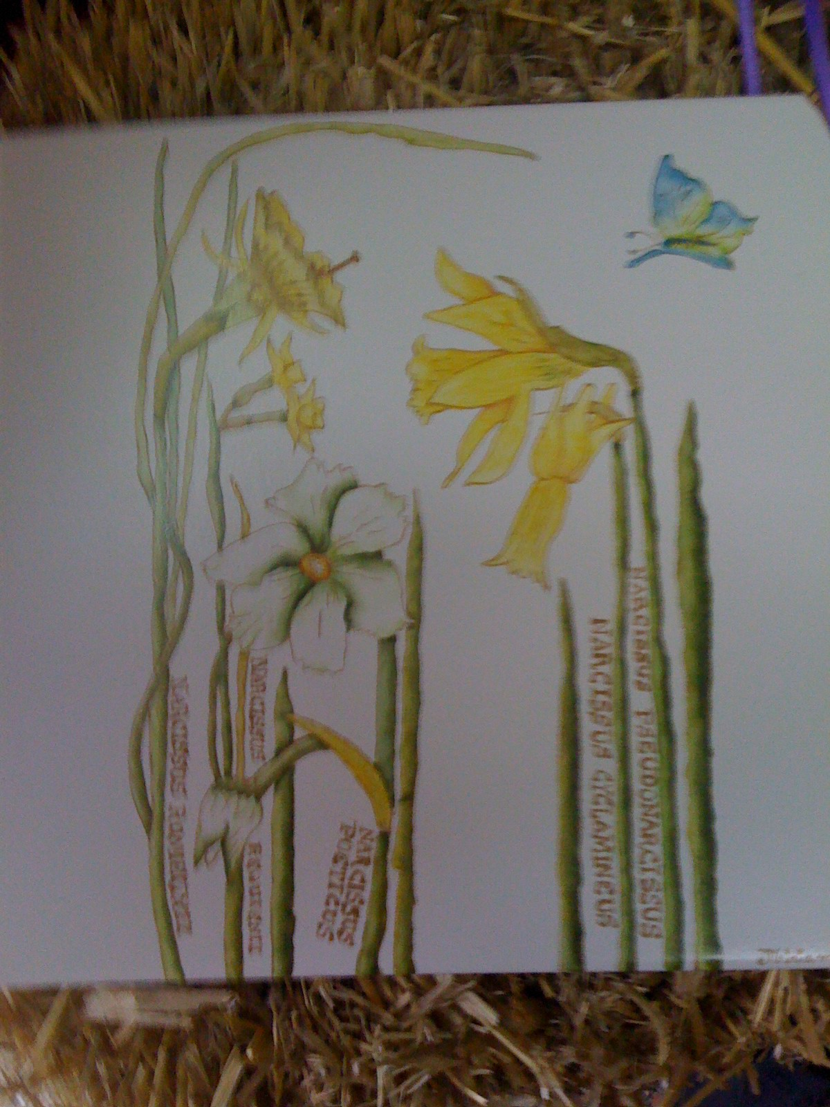 Miriam Alderisio- Pintura en porcelana